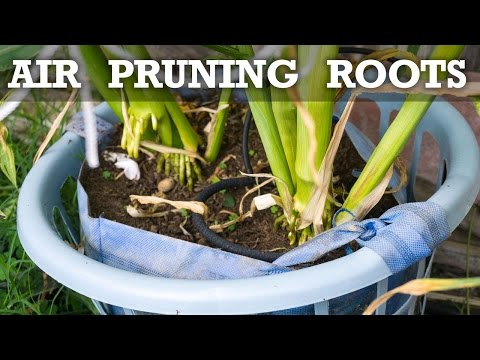 What is Air Pruning Roots? Does Air Pruning Work?
