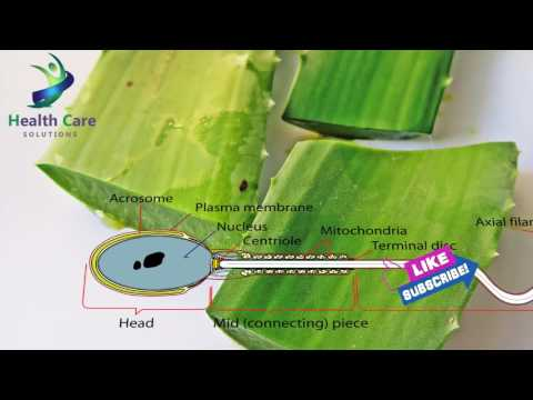 Aloe Vera for male Infertility Treatment   Miracle Fertility Foods   How to increase Sperm Count