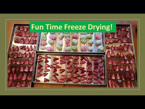 Fun time Freeze Drying