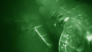 Mariana Trench Shark - Deepsea Oddities