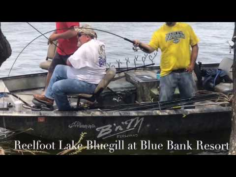 Bluegill Fishing in Front of the Resort