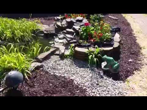 Update on my garden pond, my parent made it look great while I was away at school