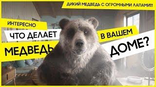 Стиральная машина AddWash + EcoBubble™: Уроки макияжа от медведя