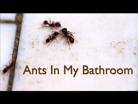 Ants In My Bathroom Video