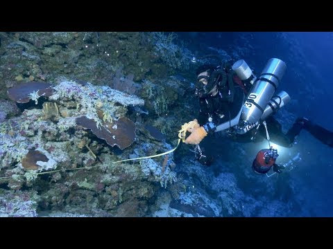 After the Storm with The Deepest Divers on Earth  | California Academy of Sciences