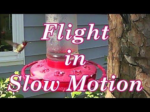 Hummingbirds - Slow Motion Poetry in Flight