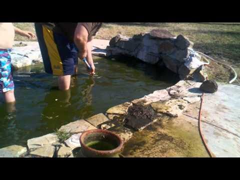 Koi pond cleaning