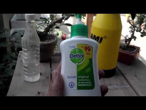 How to Pesticide | Homemade Bug Spray for Plants | Natural Aphid Control (Urdu/hindi)