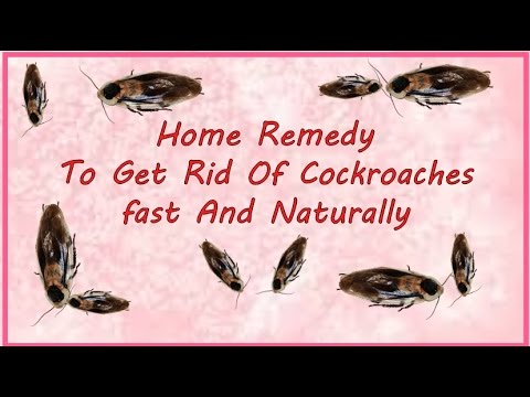 How To Get Rid Of Cockroaches in apartments fast And Naturally