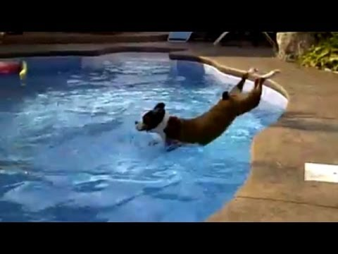 Funny Dogs - Hilarious Pool Fail Compilation!