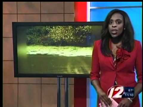 Algae blooms found in 5 local ponds