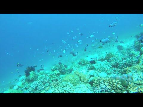 Bali Lombok Vietnam Singapore December 2014 [GoPro HD] Travel Video Diary