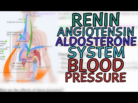 Renin-Angiotensin-Aldosterone System (RAAS) and Blood Pressure