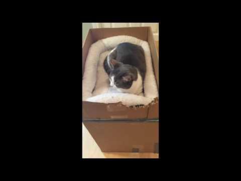 DIY Cat Furniture - How to Make a Cardboard Cat house