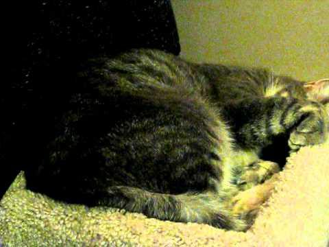 Smokey the cat breathing heavy?
