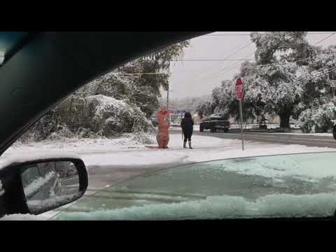 Cold Weather and Snow in Louisiana with Dinosaurs - Livingston Parish