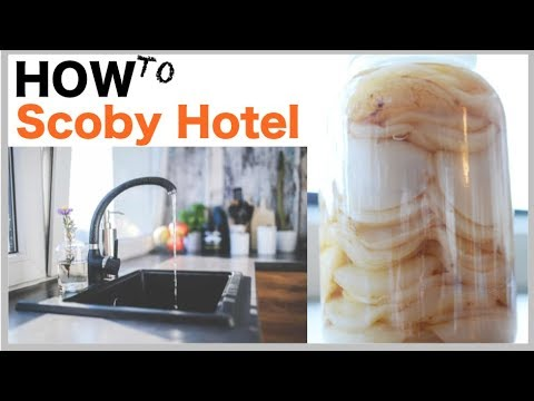 How To: Scoby Hotel
