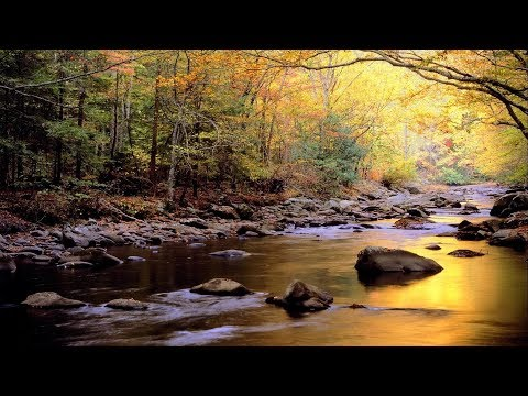 Relaxing Water & Birds Sound - Music for stress relief - Water  & Birds. 1 hour