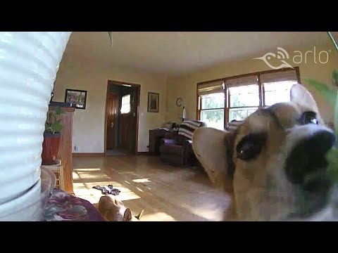 Caught on Arlo: Pepper the Puppy