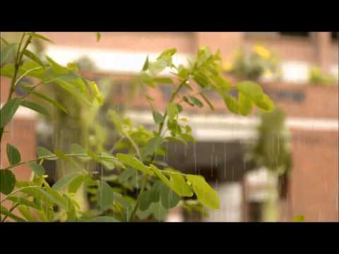 Documentary Video on Ideal School & College (Banasree)