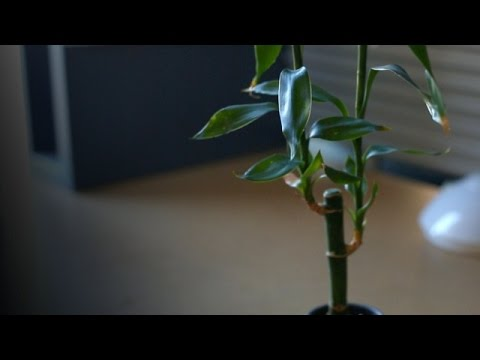 The Benefits Of Plants Go Well Beyond Photosynthesis - Newsy