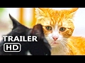 Download                KEDI Official Trailer + Clip (2017) Cats Documentary Movie [HD] MP3,3GP,MP4