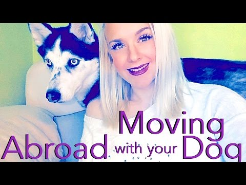 How to Travel or Move Abroad with your Pet!