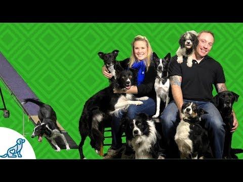 Dog Sports Injury Prevention