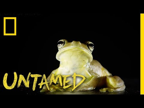 This Frog is a True Gladiator | Untamed