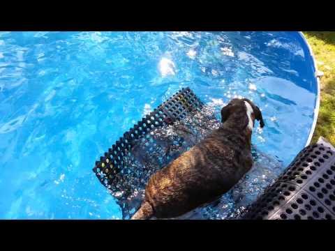 Homemade Doggie Pool Ramp