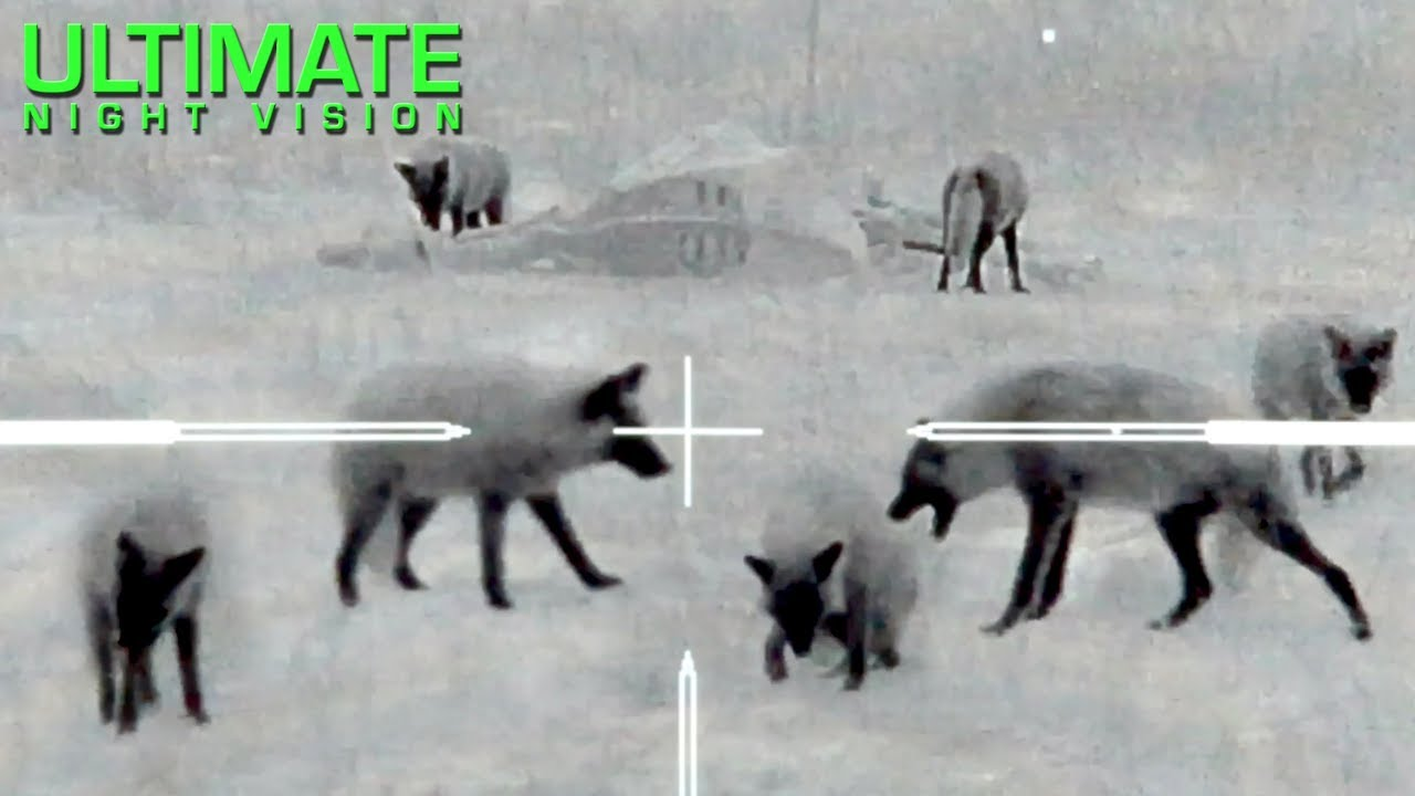 Thermal Predator Hunting   60 Coyotes Down by O'Neill Ops