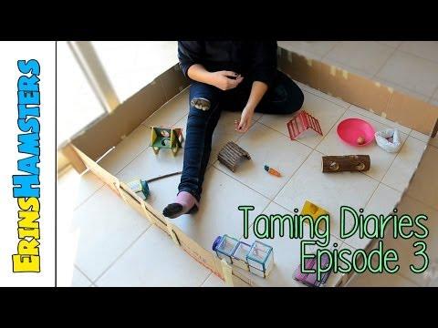 Taming Diaries | Season 1 | Episode 3