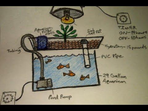Aquaponics for Dummies - The Easiest DIY Indoor Aquaponic System