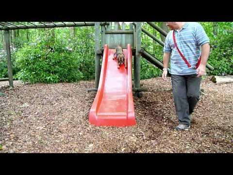 Pip on slide.