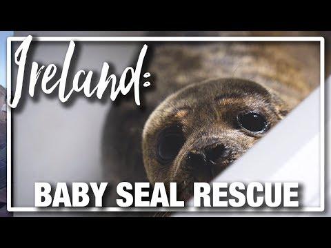 Ireland: Boys Volunteer to Help Rescued Baby Seals