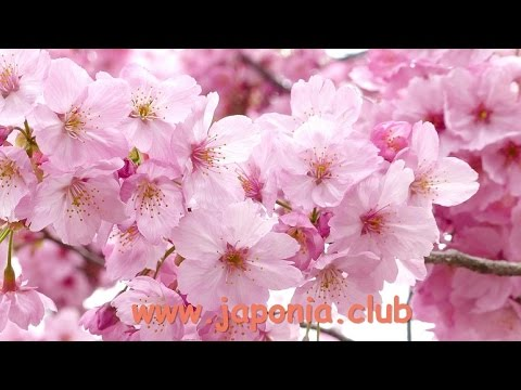 Top Japanese Flowers for your Girlfriend - with comments - japonia.club