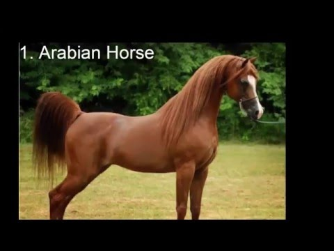 Top 10 Most Expensive Horse in The world
