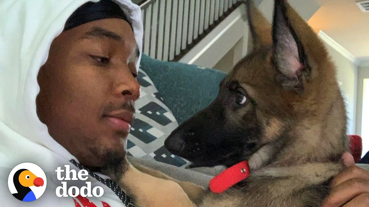 NBA Player's German Shepherd Is The Biggest Daddy's Girl | The Dodo Teammates