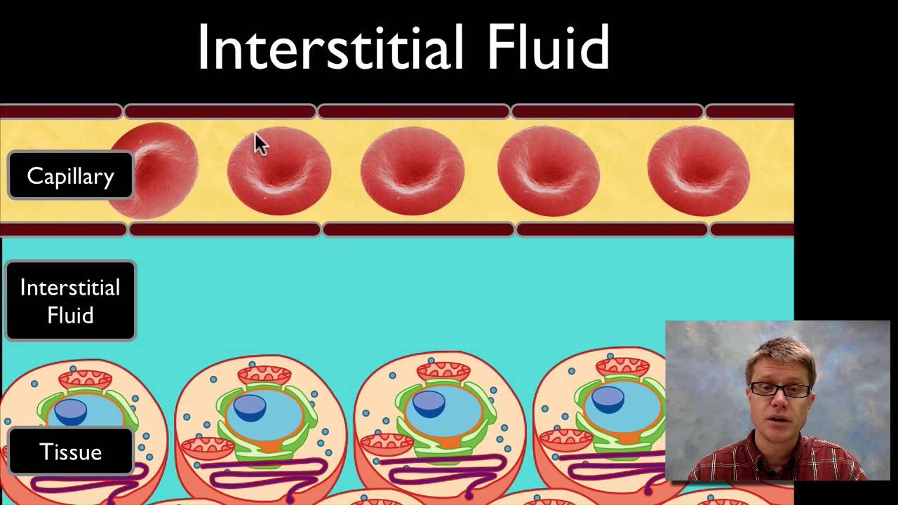 Interstitial Fluid