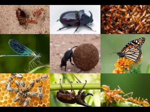 15 Amazing Facts About Insects