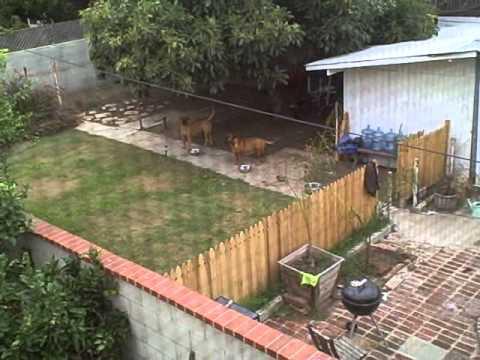 Neighbor Dogs Barking - Please Make Them Stop!
