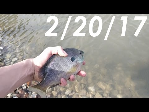 Fly Fishing Farm Ponds for Winter Bass, Bluegill, and Crappie