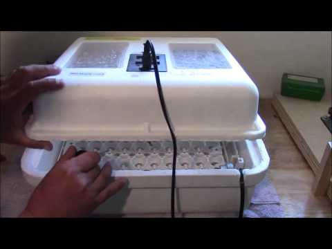 How to Improve Your Hatch Rate Part 3: Preparing Your Incubator for Incubation