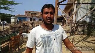 Barbari Goat For Sale in Mathura - PakVim net HD Vdieos Portal