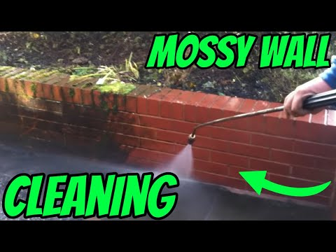 Cleaning a mossy wall