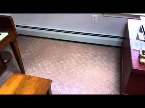 Cleaning Dog Feces Out of Carpet: Mercer County NJ