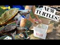 LIVE Turtle Unboxing+POND RELEASE!!
