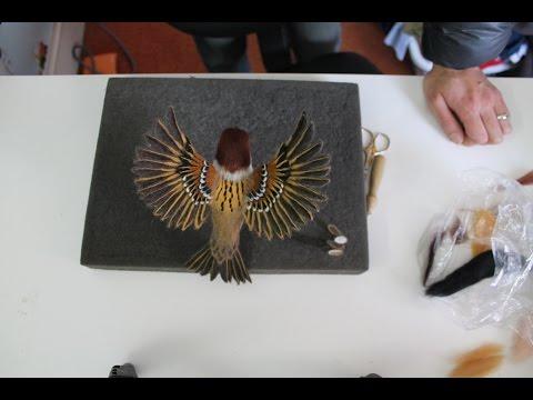 Eurasian Tree Sparrow Needle Felting Time-lapse