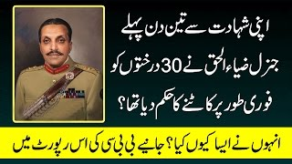 Apni Shahadat Sy 3 Din pehle 30 Darakht Q Katwae | جنرل ضیاالحق نےاپنی شہادت سے پہلےدرخت کیوں کٹوائے