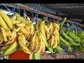 Caribbean Fruits & Vegetables Roadside Market.